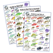Maps & Fish ID Cards